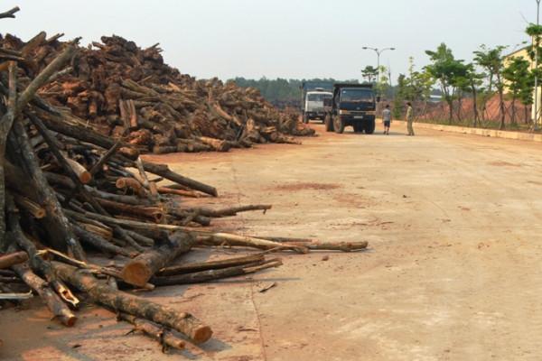 Làn sóng đầu tư vào công nghiệp chế biến gỗ Miền Trung